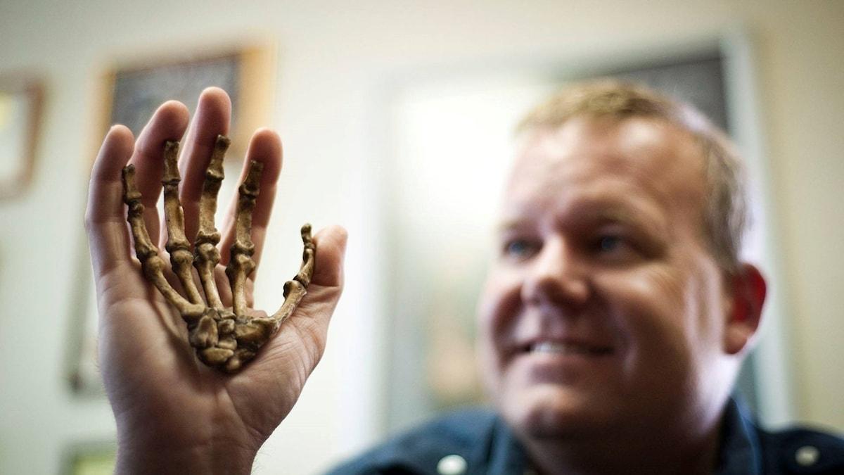 Lee Berger håller upp en replika i sin hand. Homo naledis hand är mindre.