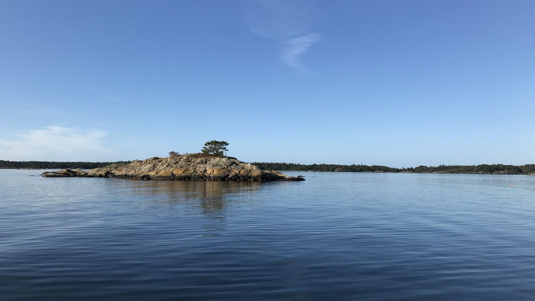 Bild på kobbe i Östersjön