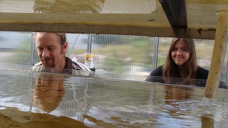Forskare framför odlingen av alger