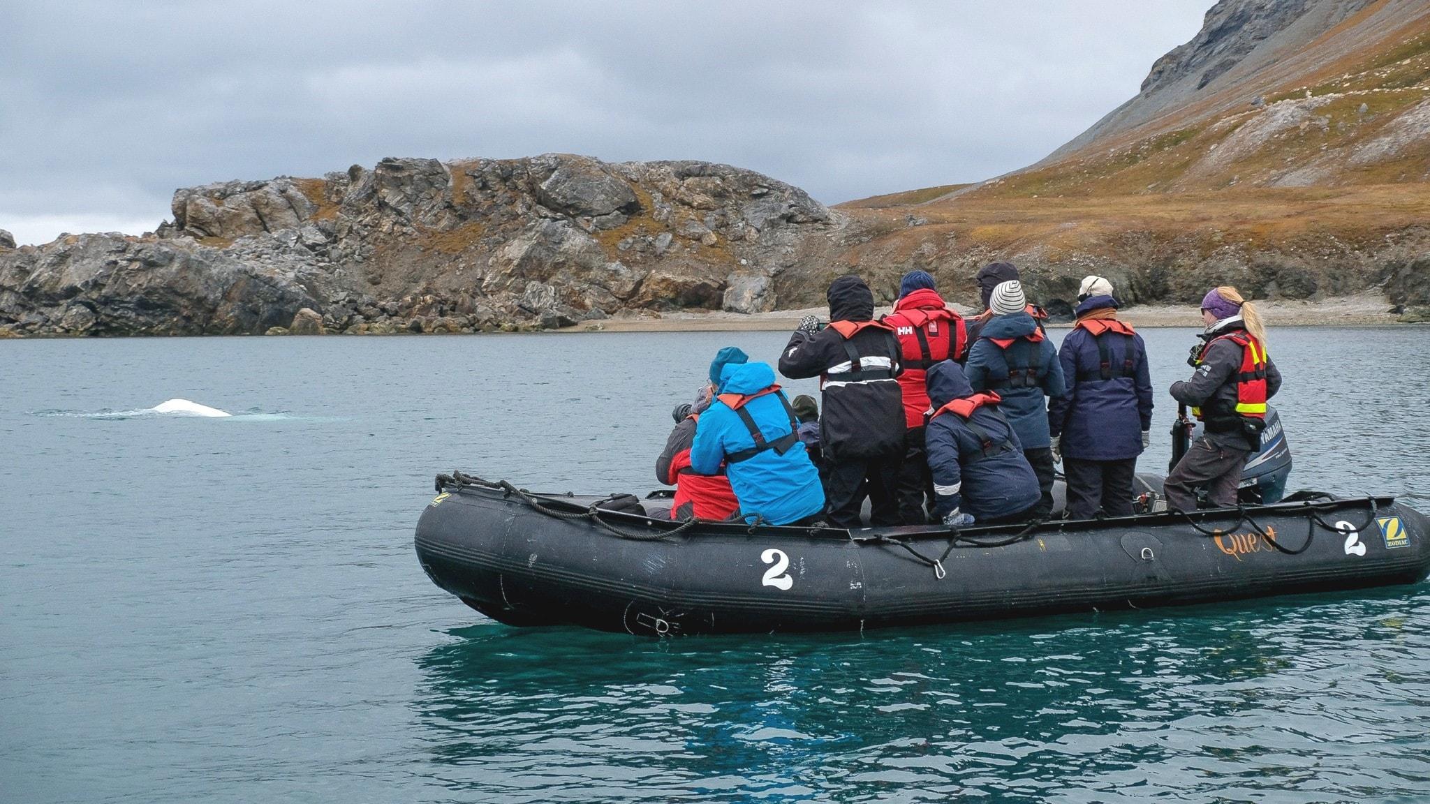 Del 3/3. Svalbard - Valarnas framtid i ett trafikerat Arktis