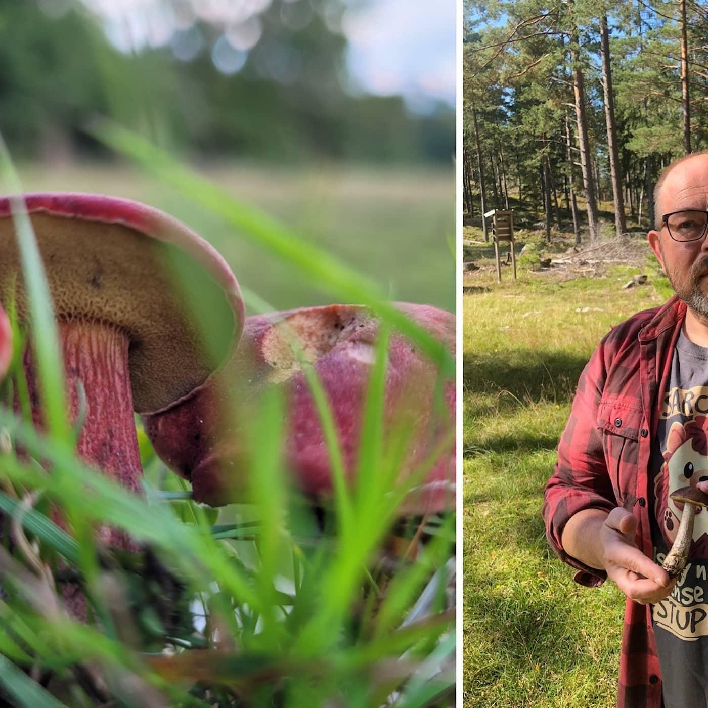 Svamparnas okända nätverk under jorden hjälper träden och klimatet