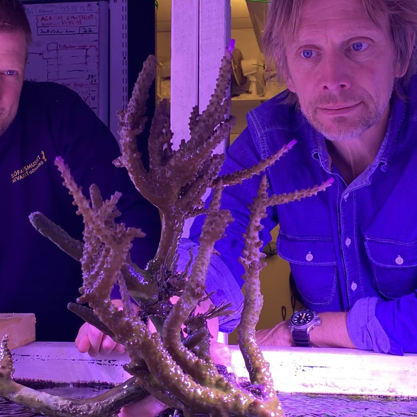 Korallernas egen Noas ark ska rädda dem från klimatkatastrofen - i Göteborg