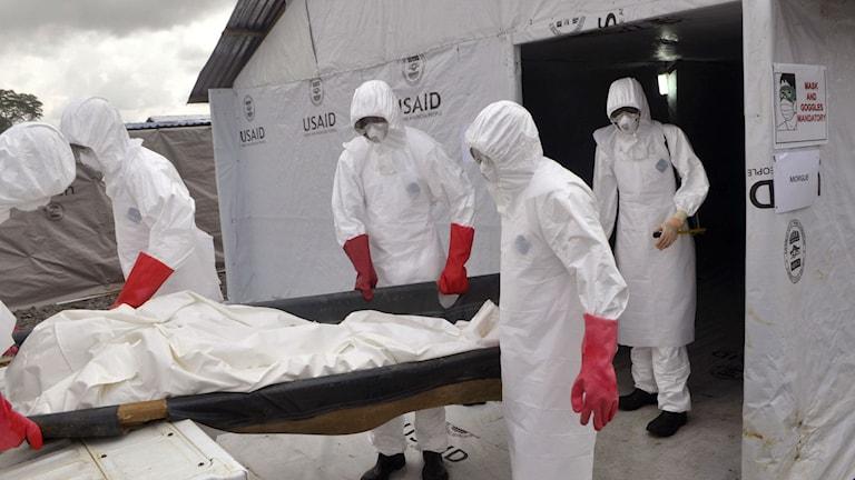 Sjukvårdspersonal för bort en man som vårdats vid en amerikansk ebolaklinik utanför Monrovia