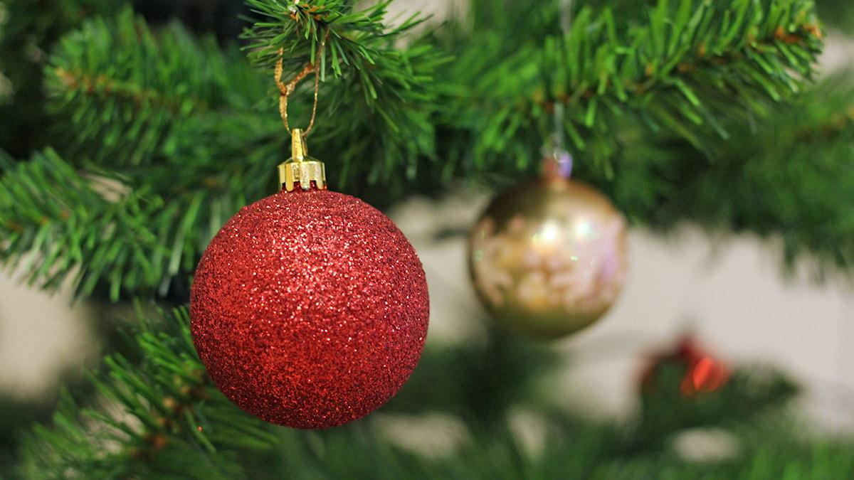 Märkliga frukter, tycker nog djuren som följt med i julgranen. Foto: Jonna Spik/SVT Bild