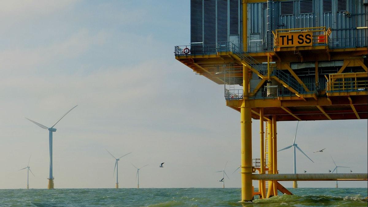 vindkraftsparken Thanet