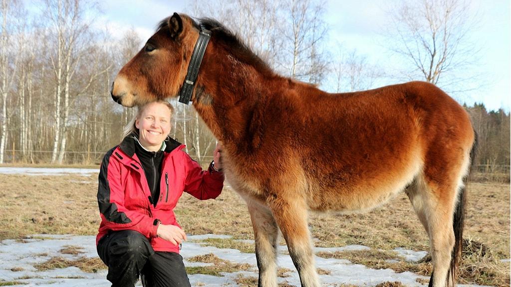 Anna Jansson och russhingsten Kotten