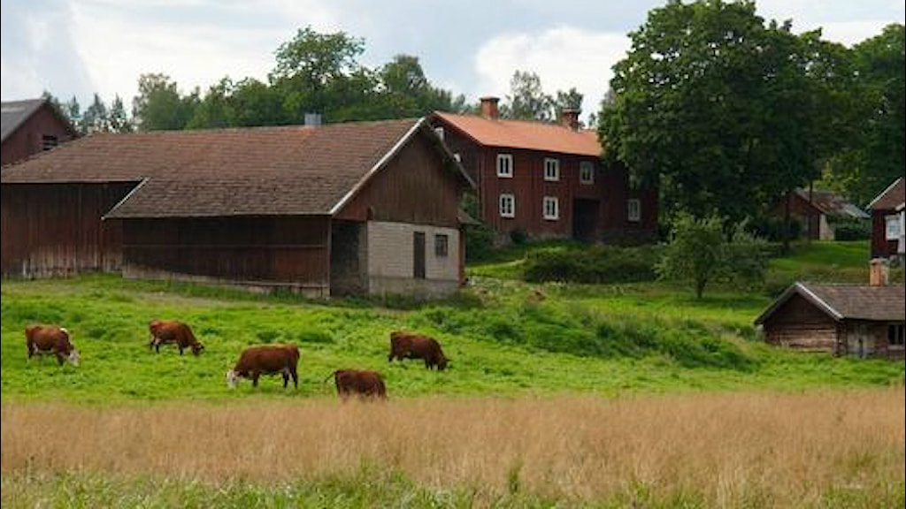 Bondgård i Stimmerbo. Foto: Kulturmiljöbild, Riksantikvarieämbetet/Wikimedia Commons/Creative Commons Erkännande 2.5 Sverige
