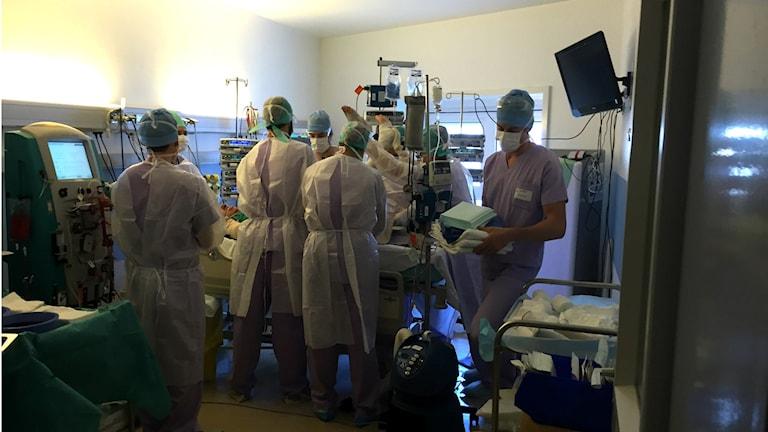 För att byta bandage och tvätta rent krävs 8 personal. Foto: Johan Bergendorff / Sveriges Radio