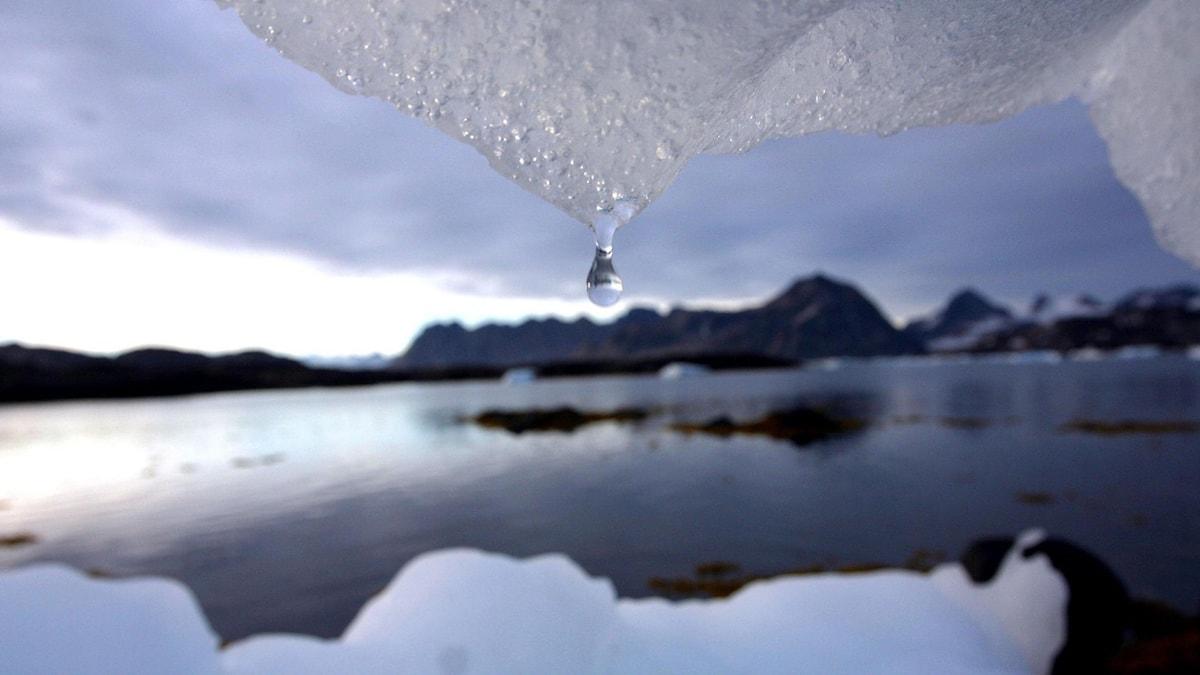 vattendroppe från is . Foto: John McConnico/TT