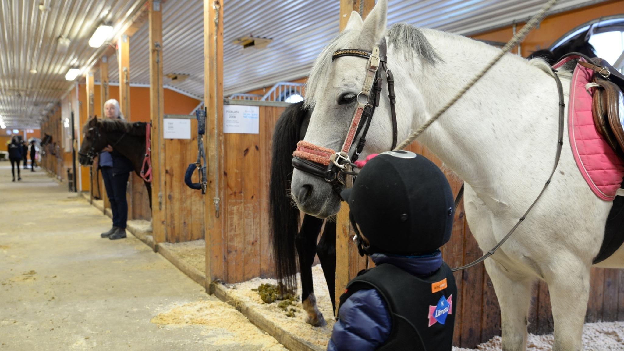 Wilma i stall bredvid vit häst som står i spilta