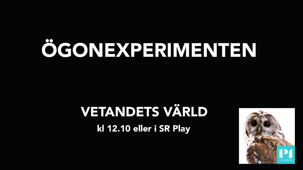 text: Ögonexperimenten