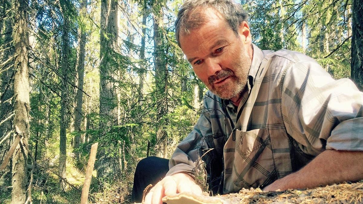 Per Simonsson inspekterar en stam