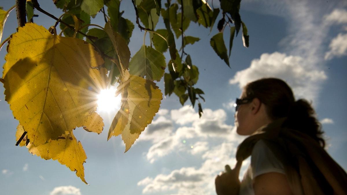 Kvinna går och sol bryter igenom blad