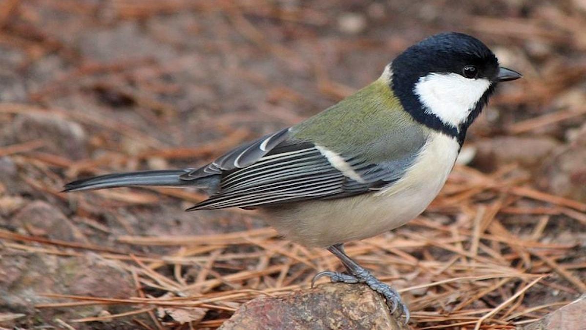 Fågeln sitter på en sten