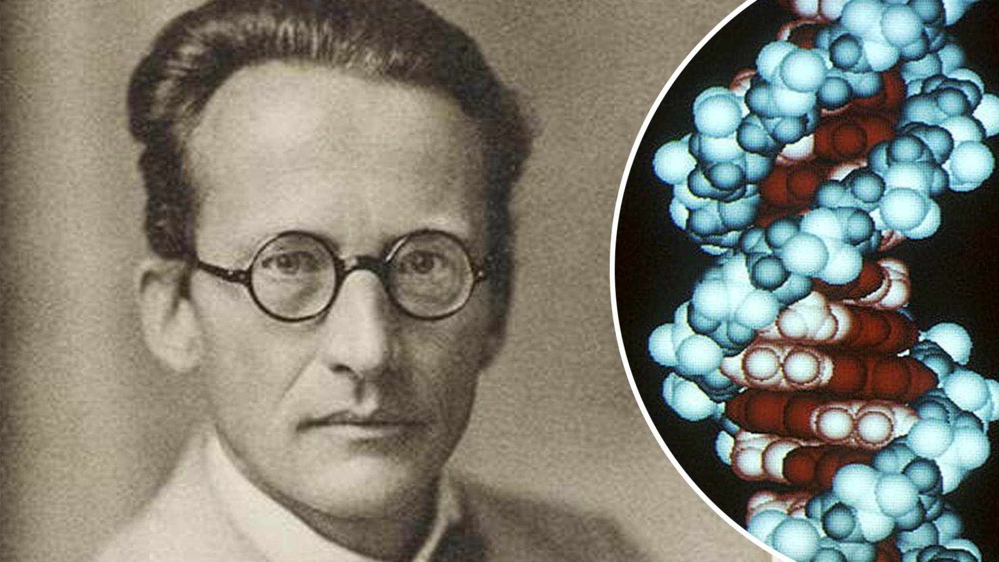 Fysikern Erwin Schrödinger väckte frågor som förde den biologiska vetenskapen framåt, bland annat till upptäckten av DNA-spiralen.