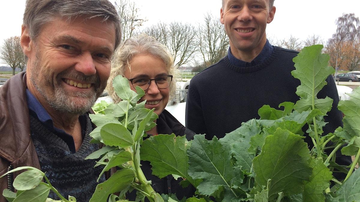 Foderforskaren Rolf Spörndly, växtodlingsrådgivaren Anna Aurell och lantbrukaren Anders Carlsson