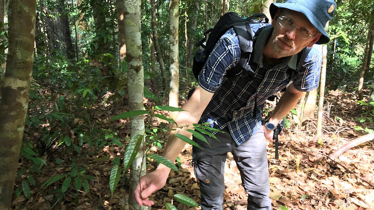 Ulrik Ilstedt i solhatt håller i en ung planta i regnskogen