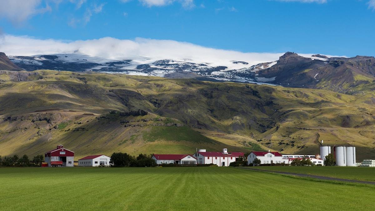 Grönt fält i förgrunden, gården med vita byggander och glaciären i bakgrunden.