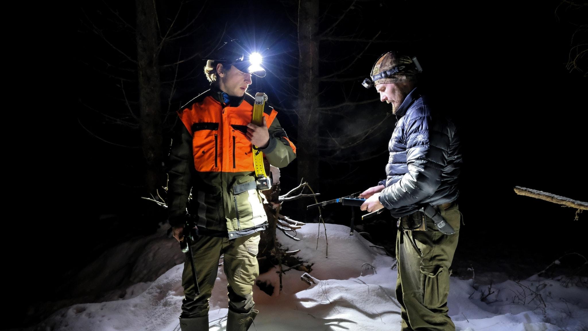 De vill förhindra att svinpest sprids i svenska skogar