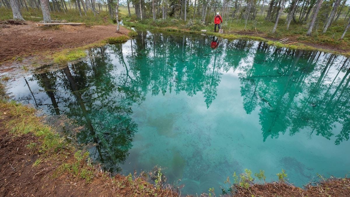 En turkosblå vattenkälla i skogen omges av grön mossa. På strandkanten står en man i röd jacka.