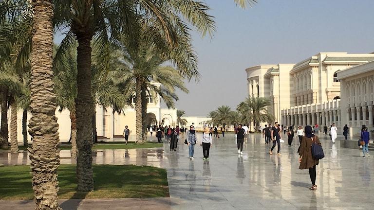Studenter på området American University of Sharjah