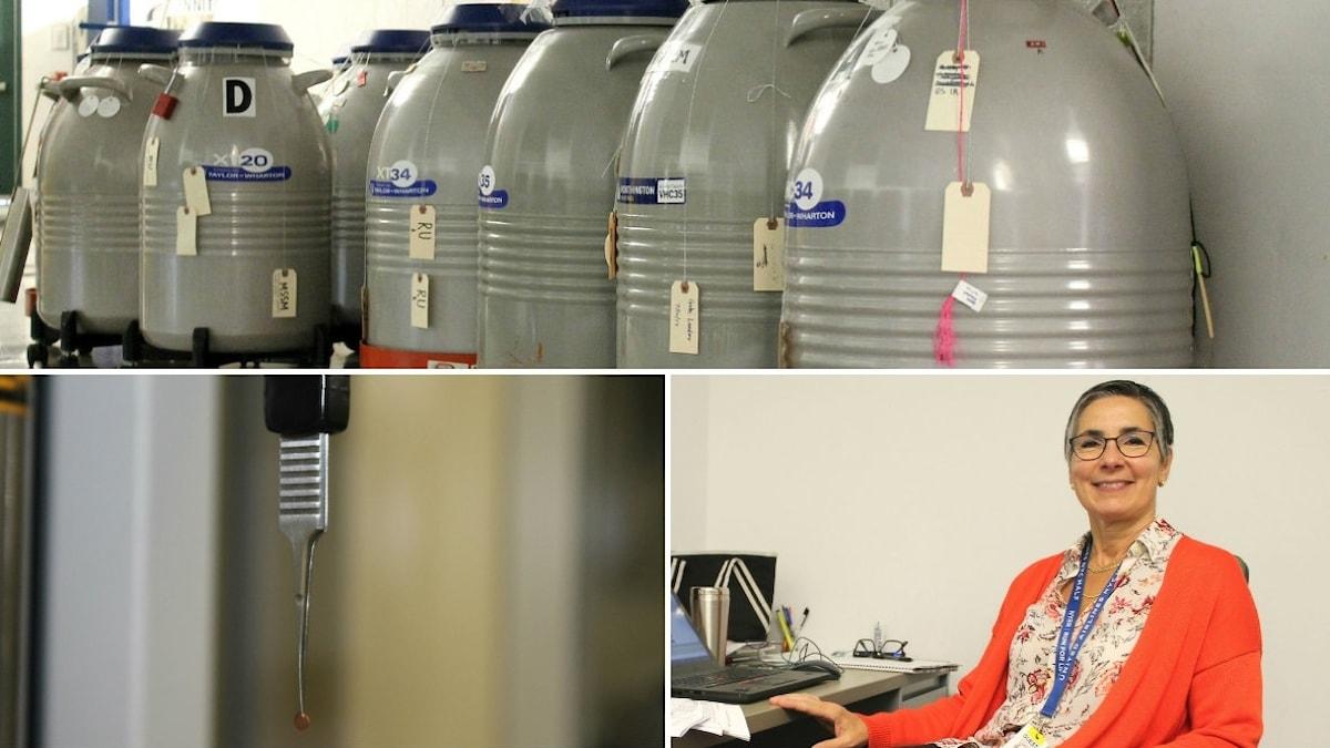 Tre bilder: proteinbehållare, grid och Giovanna Scapin vid skrivbord