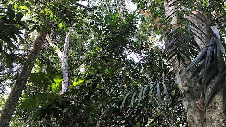 Grönskande skog av träd och palmer sedd ur grodperspektiv.