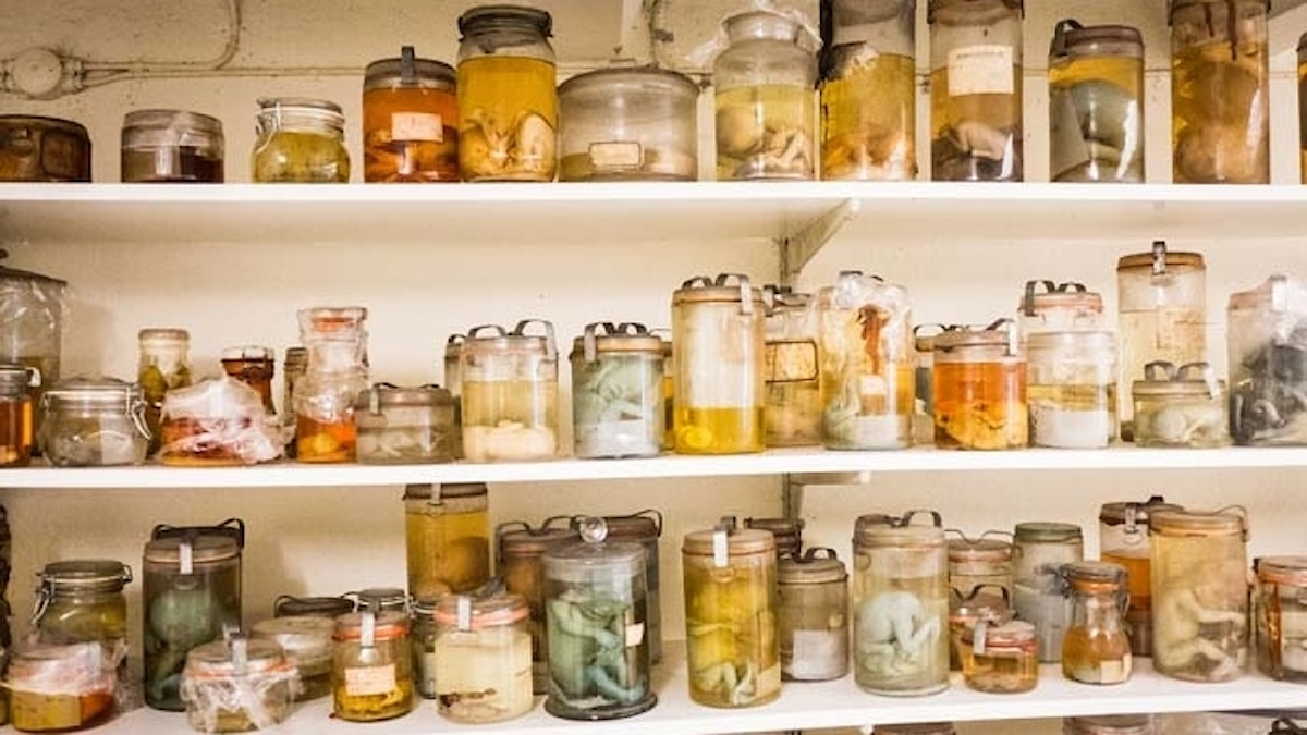 Foster i konserveringsburkar av glas