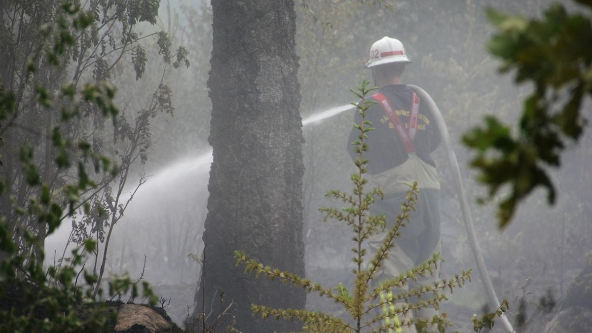 Brandman sprutar vatten på marken.