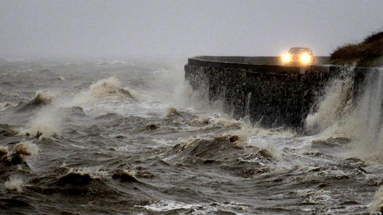 Storm. Foto: Peter Morrison/TT