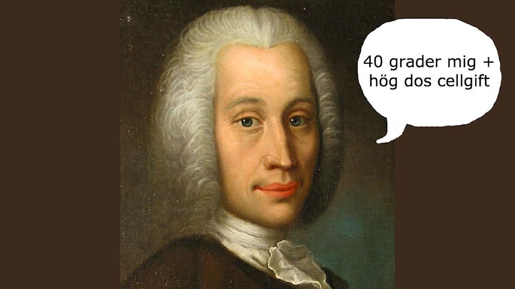 Celsius, porträtt av Olof Arenius