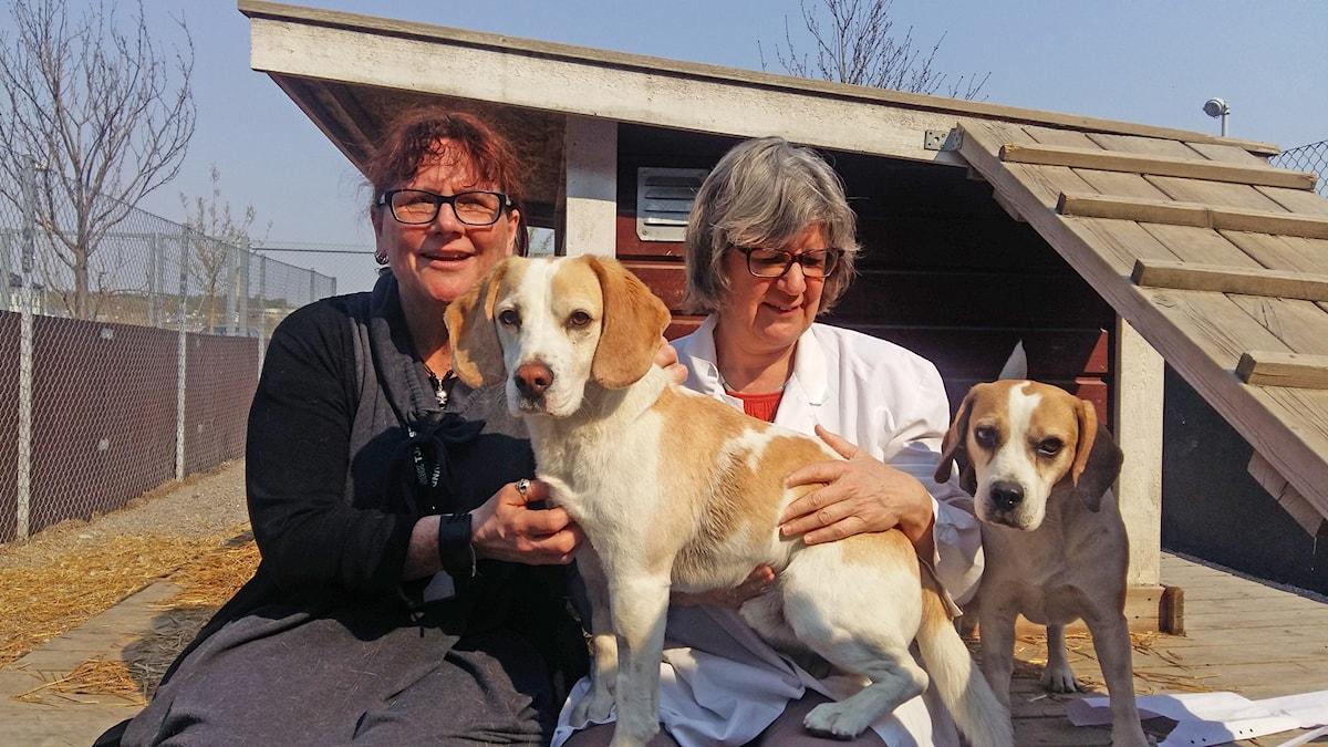 Två kvinnor sitter utomhus vända mot kameran och har en beaglehund mellan sig och en hund vid sidan om.