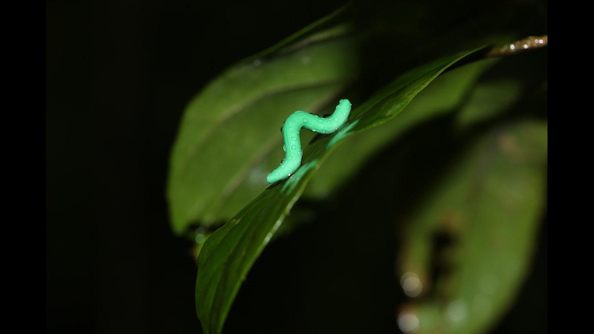 konstgjord larv på blad