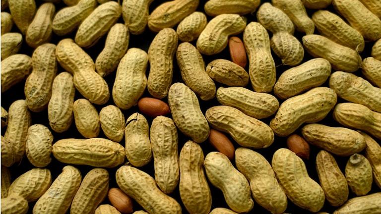 Jordnötter i en hög med skal på och skalade. Beiga med skal och lite mer mörkt orange-brun utan skal.