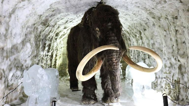 Rekonstruktion av mammut med äkta betar, i Yakutsk, Sibirien. Foto: Torill Kornfeldt