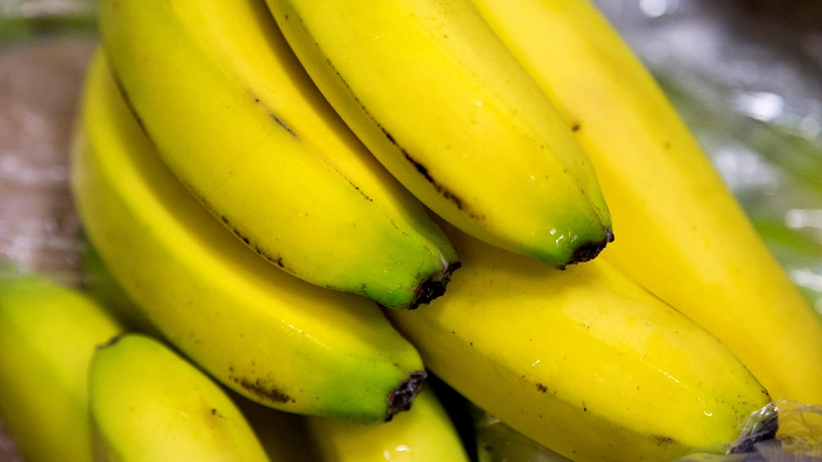 bananer i klase. Foto: TT