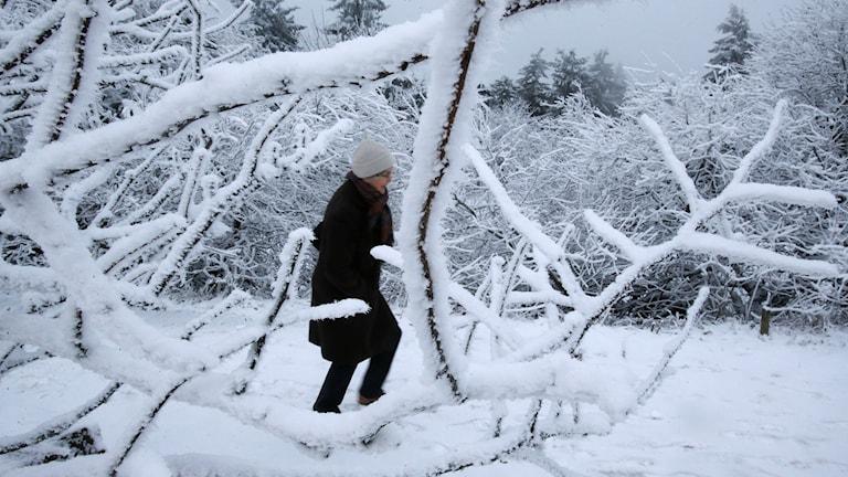 Kvinna på promenad bland översnöade grenar. Foto: TT