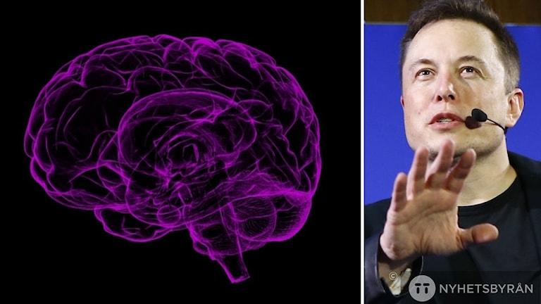 Elon Musk pratar brevid en bild på en hjärna.