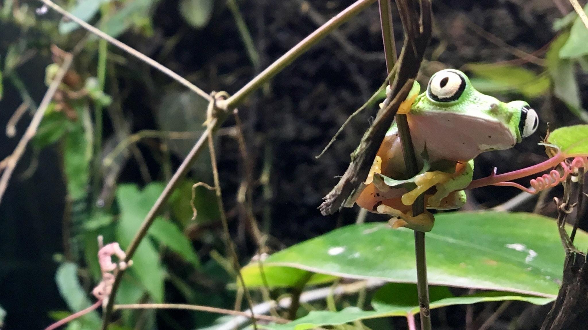 Nytt hopp för världens grodor