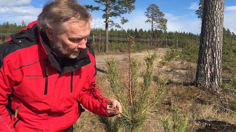 Jan Stenlid håller i en kvist