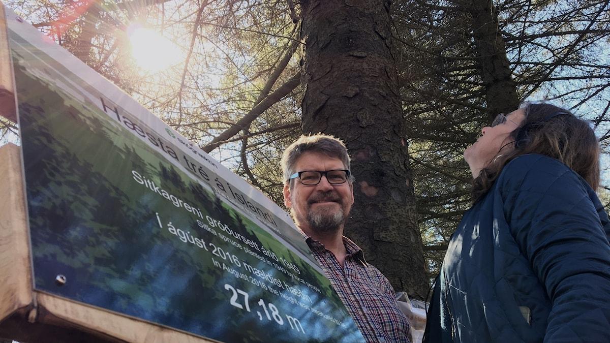 Adalstein Sigurgeirson, vicedirektör och Lena Nordlund vid Islands högsta träd.
