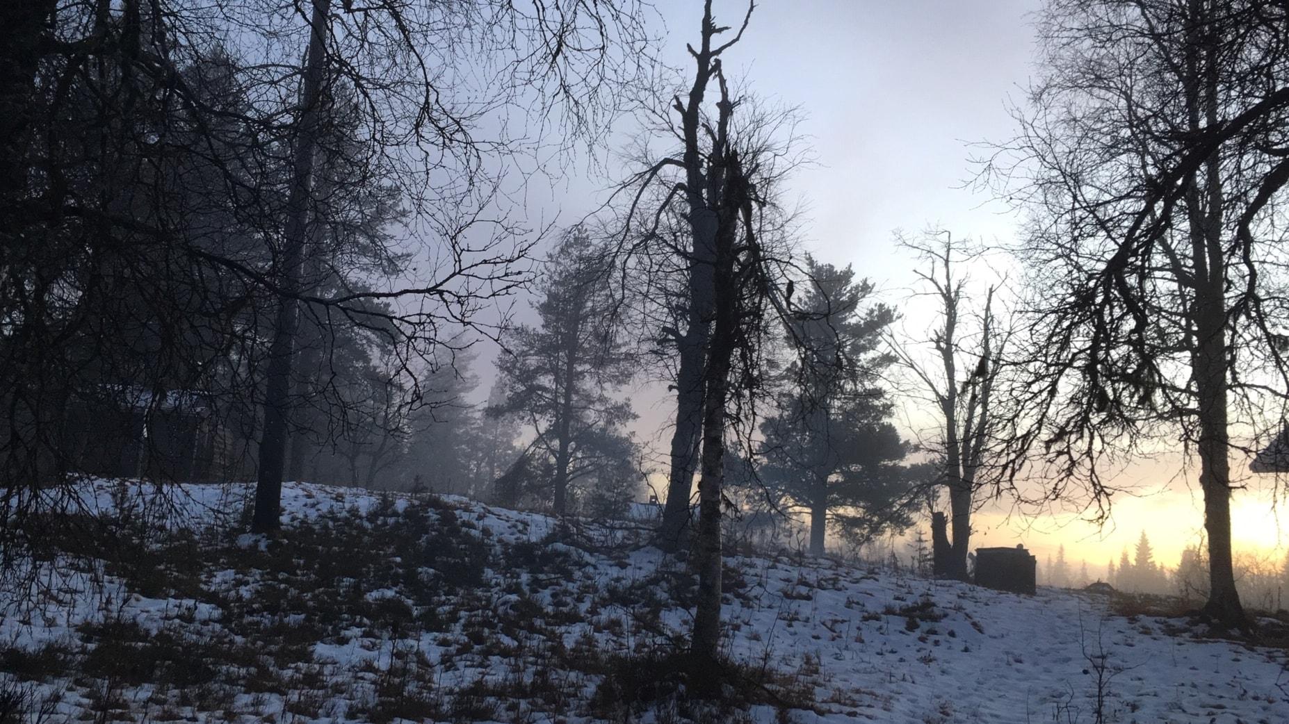 """""""Skogen som tempel"""""""
