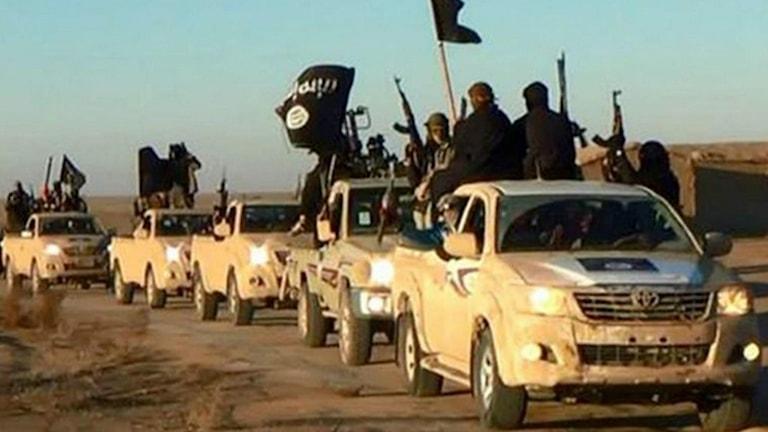 IS-krigare i bilar utanför staden Raqqa i Syrien. Foto: TT/AP