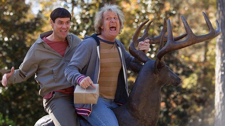 Jim Carrey och Jeff Daniels byfånar loss. Foto: Universal Pictures