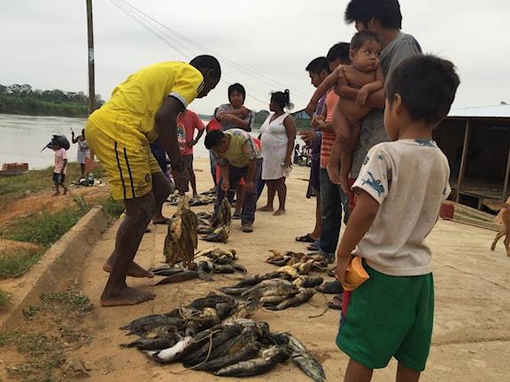 På morgonen samlas byborna för att köpa fisk.  Foto: Lotten Collin/SR