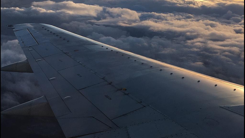 flygplansvinge sedd från insidan av ett fönster på hög höjd
