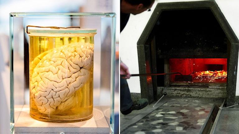 Hjärna i glasburk på museum och bild på krematorieugn.