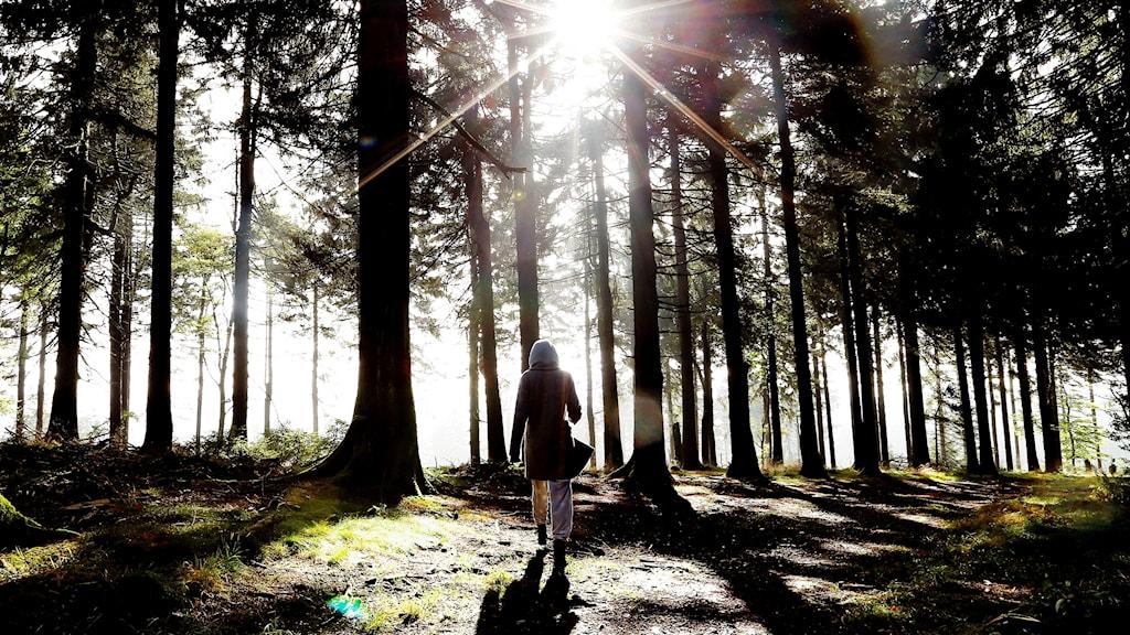 En person promenerar i skogen