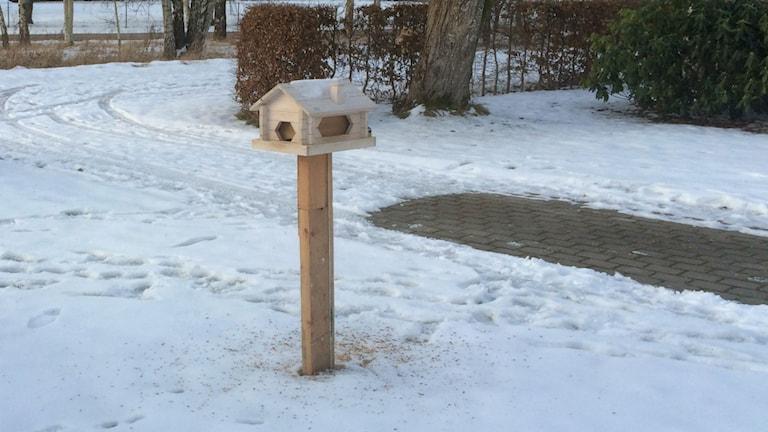Pihalla lintulauta jonka takaa sinitiainen kurkistaa, jälkiä lumessa ja lumeton paikka jossa auto ollut pysäköitynä ennen lumentuloa. Kuva:Ulla Rajakisto/Sveriges Radio Sisuradio