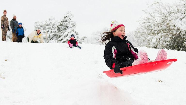 Pikkutyttö laskee pulkkamäen hyppyristä punaisella pulkalla.